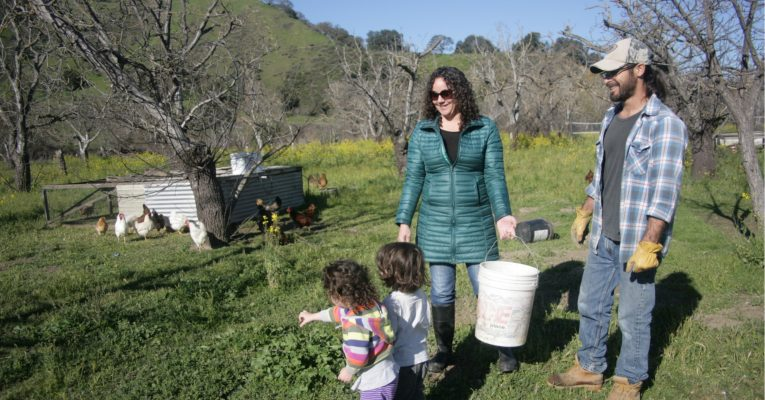 Growing chickens and family, Sol Seeker Farm, Tres Pinos