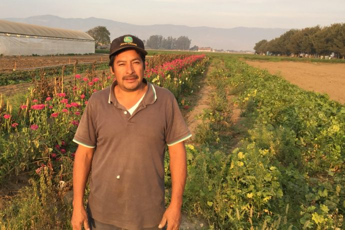 Luis Silva, Silva Organic Farms, Santa Cruz County